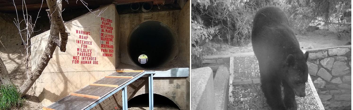 文杜拉縣118號公路下方的5處排水涵洞已改為野生動物地下走道,也捕捉到黑熊跨越涵洞的珍貴鏡頭。國家公園處
