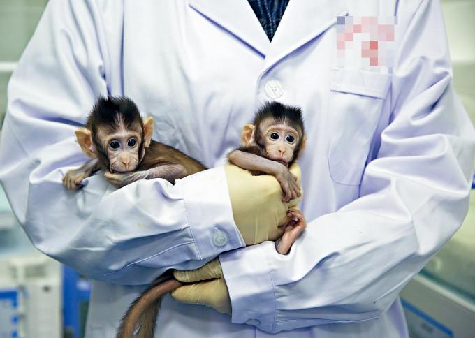 實驗用猴子供不應求。