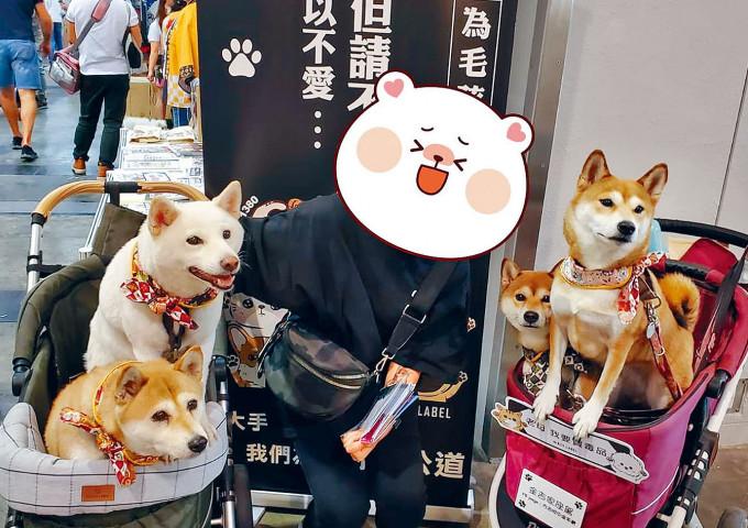 寵物節內載有四頭柴犬的兩架寵物車。