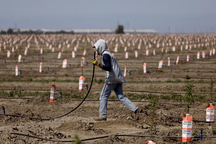 加州有30%的居住人口處在緊急乾旱地區。洛杉磯時報