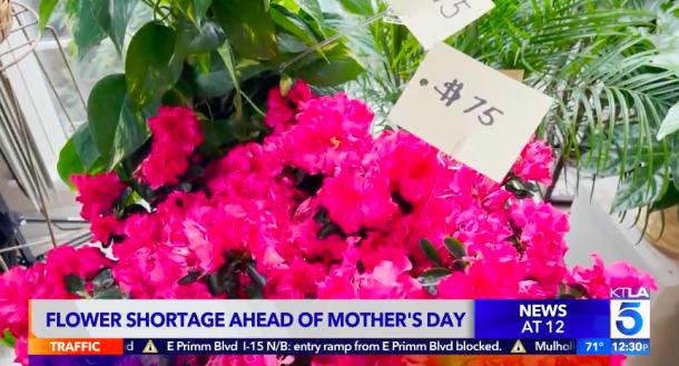 母親節鮮花供應短缺 南加價格上漲20至30%