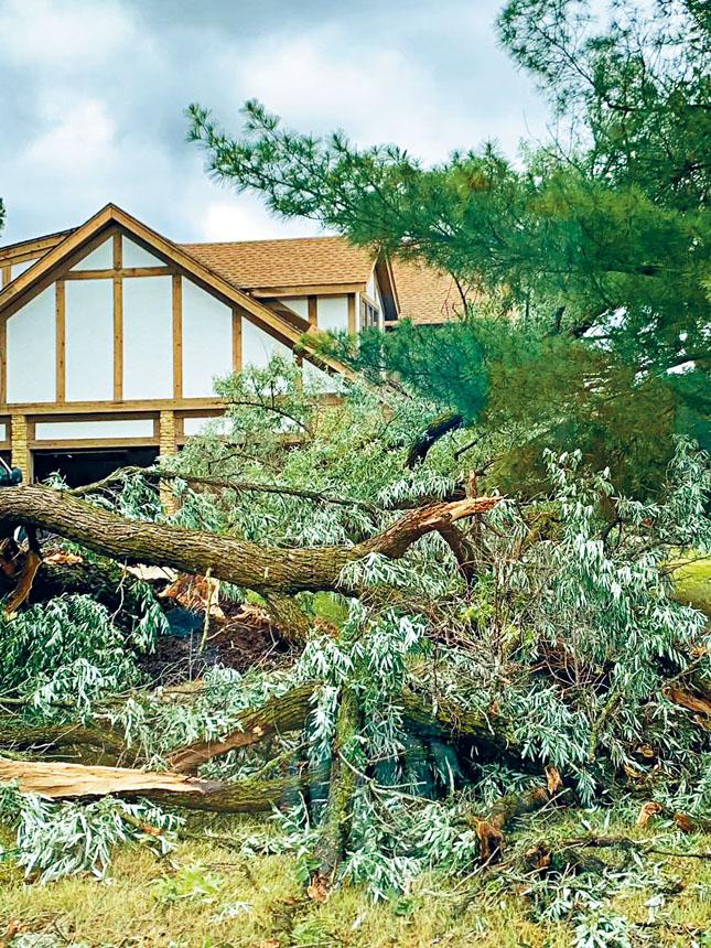 天有不測之風雲,20日晚一場驚人的龍捲風在芝加哥西南郊的杜佩郡著陸,將大樹吹得樹斷根毀。