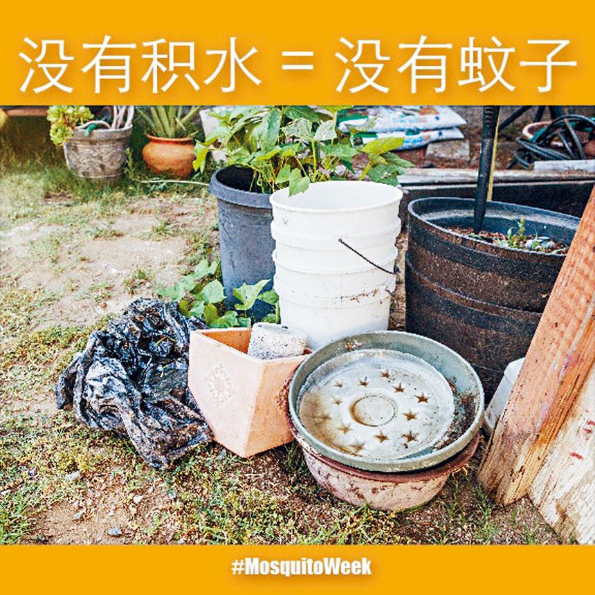 蚊蟲控制協會指出,沒有積水蚊蟲就不能孵化,就不會有蚊子。網絡照片